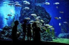 Gdynia Atrakcja Akwanarium Akwarium Gdynskie MIR